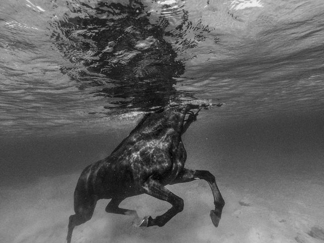 Alexandre Coric, Fine art digital print, signed, Barbados horse training, 2018